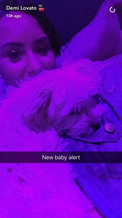 demi lovato new puppy