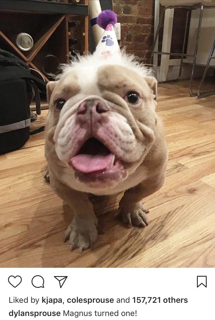 dylan sprouse dog magnus birthday