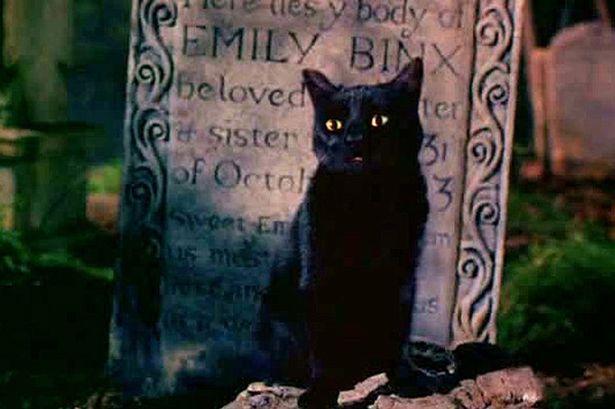 Hocus Pocus Cat Actor