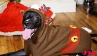 dof-reindeer-costume