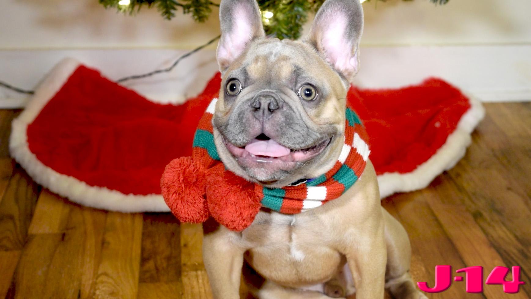 dog-christmas-scarf