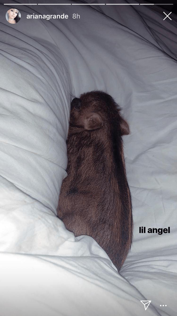 ariana grande pig