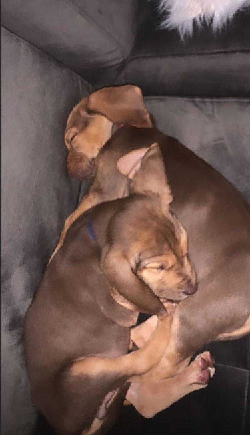 Ariana Grande Puppies
