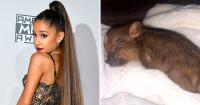 Ariana Grande Piggy Smallz