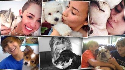 Celebrity Pets Dead