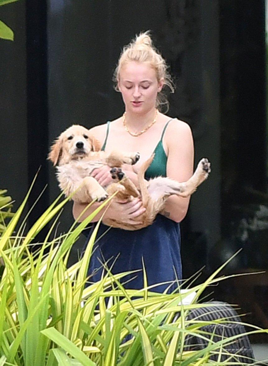 Joe Jonas Sophie Turner New Dog