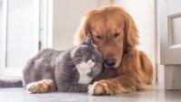 Pets coronavirus