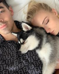 Joe Jonas and Sophie Turner Are Total Dog Lovers: A Guide to Their Pets